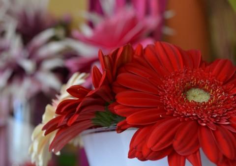 la botigueta  de la flor 17