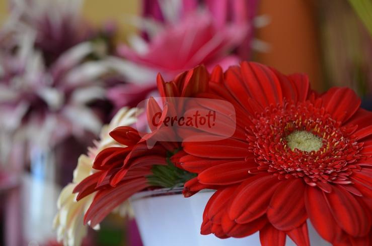 La botigueta de la flor cercatot - La botigueta ...