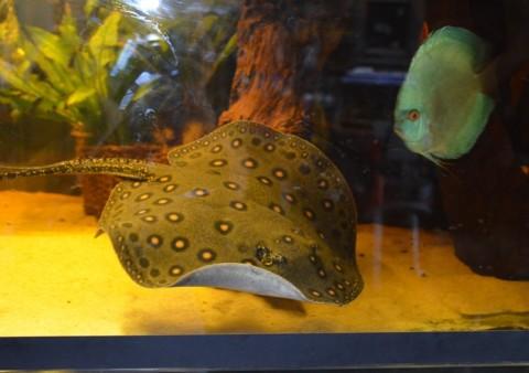 aquarium del ges 38