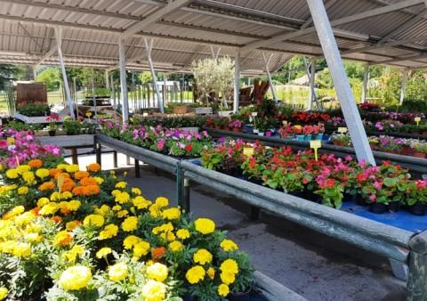 espigaverda jardineria 11