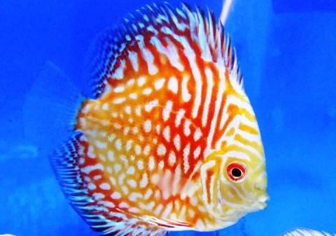 aquari floraqua 21 -cercatot.com