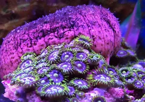 aquarios dauer 8 -cercatot.com